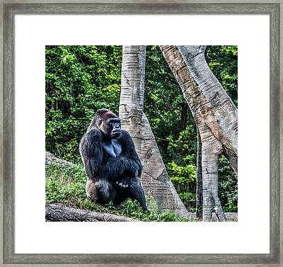 Framed Print featuring the photograph Lonely Gorilla by Joann Copeland-Paul