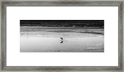 Framed Print featuring the photograph Lonely Heron by Nicholas Burningham
