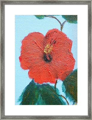 lonely Hibiscus  Framed Print by Francis Roberts ll