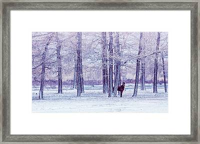 Lonely Horse In A Fairy Forest Framed Print