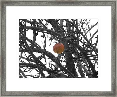 Lonely Last One Framed Print