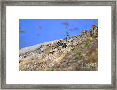 Lonely Leopard Framed Print by Al Powell Photography USA