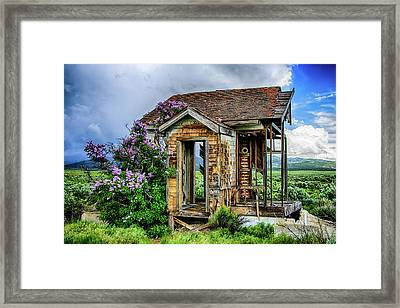 Lonely Lilacs Framed Print