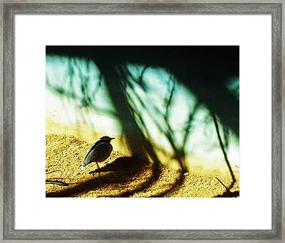Framed Print featuring the photograph Lonely Little Bird by Shawna Rowe