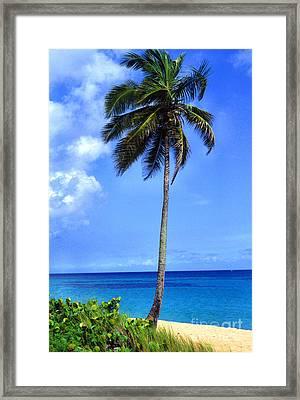 Lonely Palm Tree Los Tubos Beach Framed Print by Thomas R Fletcher