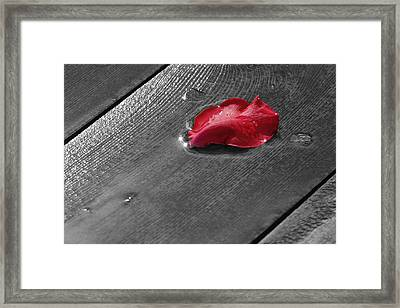 Lonely Petal Framed Print by Marrissia Ruth