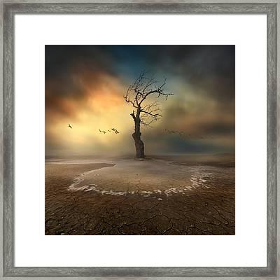 Lonely Framed Print by Piotr Krol (bax)