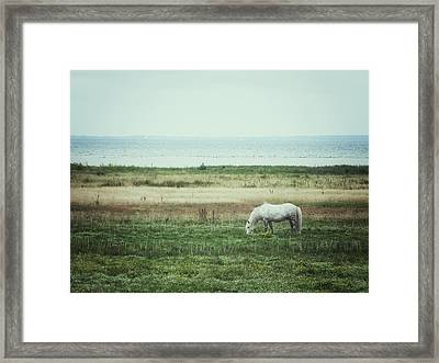 Framed Print featuring the photograph Lonely Pony by Karen Stahlros