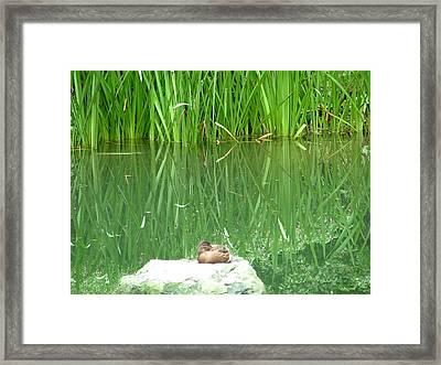 Lonely Framed Print by Rita Fetisov
