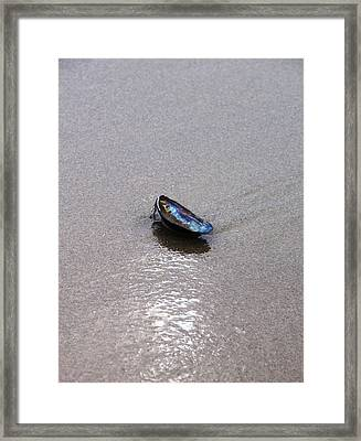 Lonely Shell Framed Print