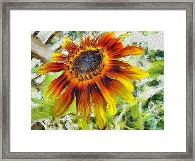 Lonely Sunflower Framed Print