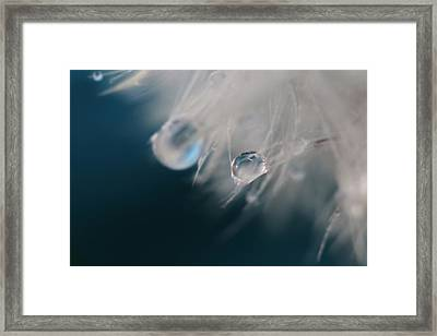 Framed Print featuring the photograph Lonely Teardrops by Amy Tyler