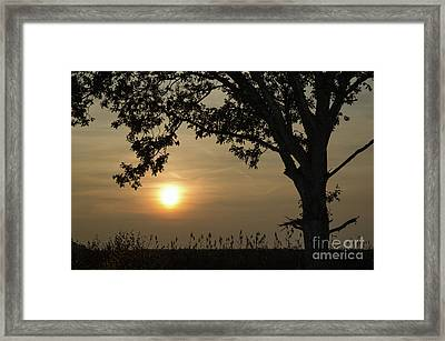 Lonely Tree At Sunset Framed Print