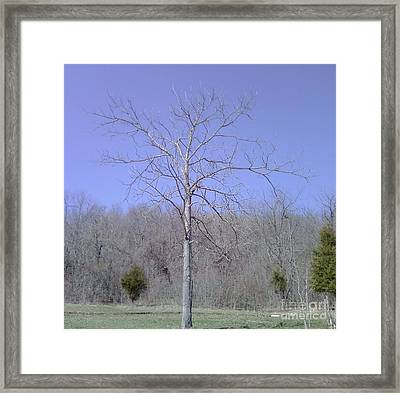 Lonely Tree Framed Print by Barb Montanye Meseroll