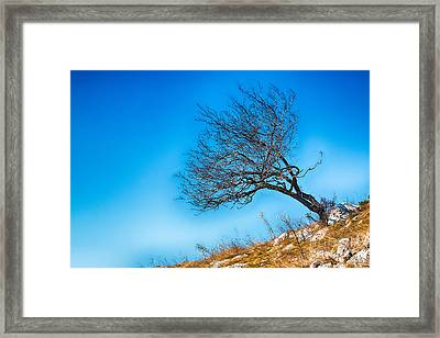 Lonely Tree Blue Sky Framed Print by Jivko Nakev