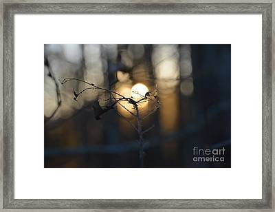 Lonely Tree Branch With Bokeh Love -georgia Framed Print