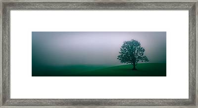 Lonely Tree In The Fog Framed Print by Don Schwartz