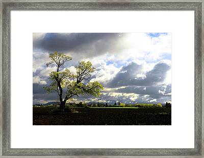 Lonely Tree Is The Summer Framed Print