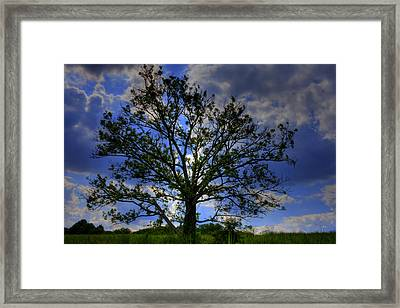 Lonely Tree Framed Print by Kevin Hill
