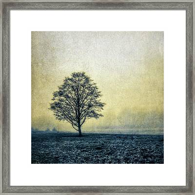 Framed Print featuring the photograph Lonely Tree by Marion McCristall