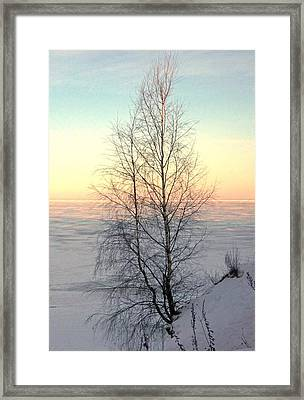 Lonely Tree On The Beach Framed Print