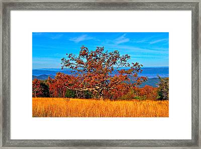 Lonely Tree Skyline Drive Va Framed Print by The American Shutterbug Society