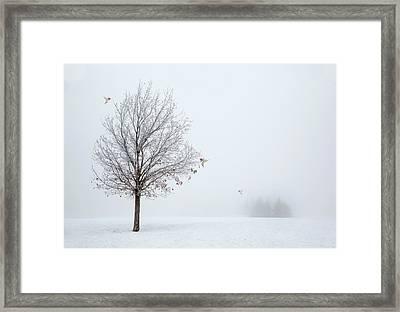 Lonely Winter As The Birds Return Framed Print by Georgiana Romanovna