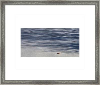 Lonely Winter Leaf Framed Print