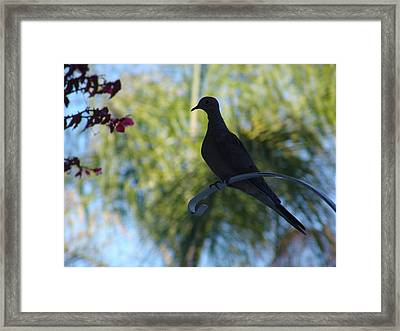 Framed Print featuring the photograph Lonesome Dove by Kevin Callahan