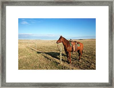 Lonesome Horse Framed Print by Todd Klassy