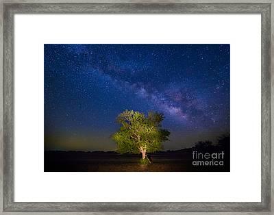 Milky Way Tree Framed Print by Inge Johnsson