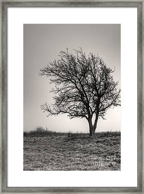 Lonesome Tree Framed Print by Tamyra Ayles
