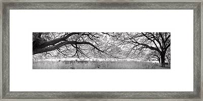 Long Branches Framed Print by Sean Davey