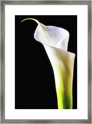 Long Calla Liliy Framed Print by Garry Gay