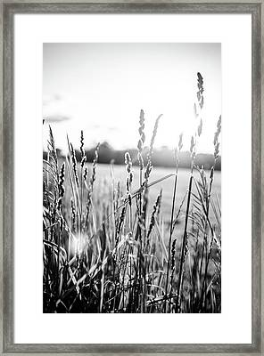 Long Grass In Black And White At Sunset Framed Print by Anthony Doudt