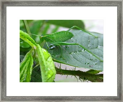 Long Green Legs Framed Print by Miss McLean