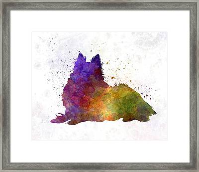 Long Haired Collie In Watercolor Framed Print by Pablo Romero