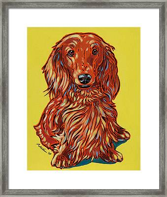 Long Haired Dachshund Framed Print