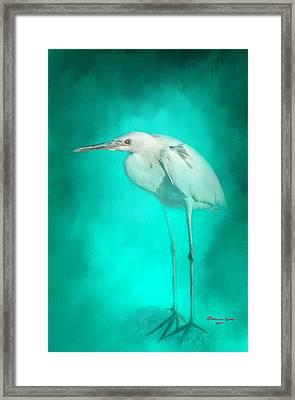 Long Legs Framed Print