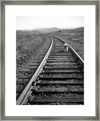 Long Road Home Framed Print