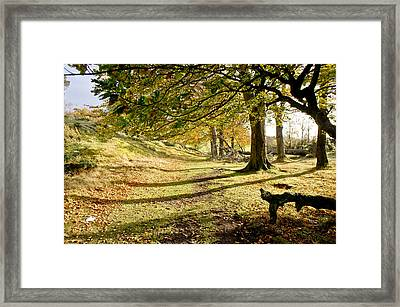Long Shadows Of The Afternoon Framed Print