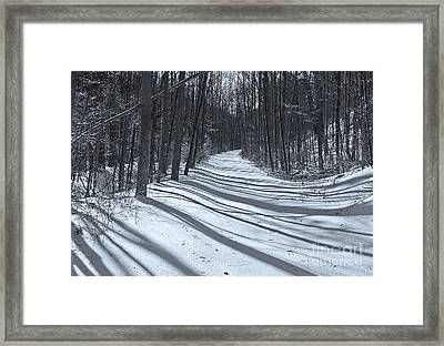 Long Shadows Framed Print