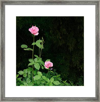 Framed Print featuring the photograph Long Stemmed Rose by Jean Noren