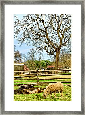 Long Street Farms Holmdel New Jersey Framed Print by Geraldine Scull