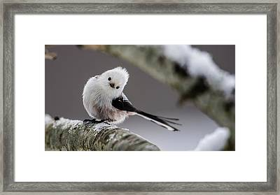 Long-tailed Look Framed Print