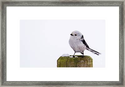 Long-tailed Tit On The Pole Framed Print by Torbjorn Swenelius