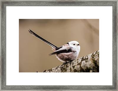 Long-tailed Tit Wag The Tail Framed Print by Torbjorn Swenelius