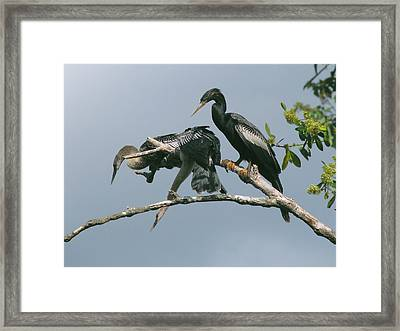 Framed Print featuring the photograph Long Way Down by Peg Urban