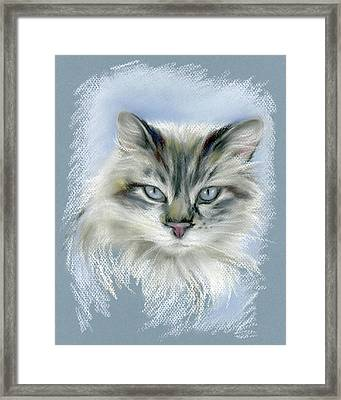Longhaired Cat With Blue Eyes Framed Print