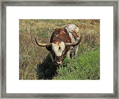 Longhorn II Framed Print by Tony Grider